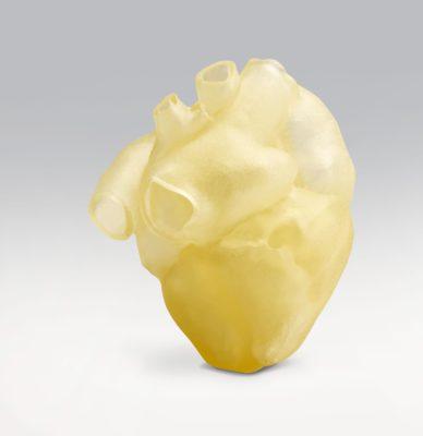 Digital-Anatomy-Heart